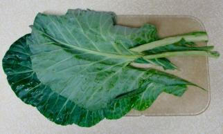 Collard Green leaves