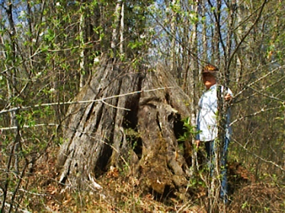 Pine Stump May 2000
